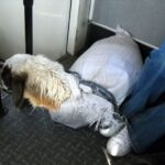 Kai's photo of a goat riding the bus with him in Mongolia